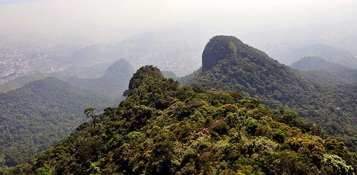 Atlantischer Regenwald in Rio - Foto: Alexandre Macieira/ Riotur