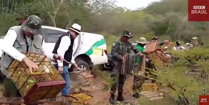 Vogelbefreiung Alagoas_Handout