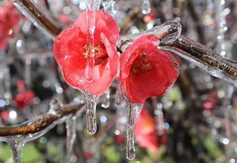 Frost in São Joaquim- SC - Foto: Mycchel Husdonn Legnaghi / Agência São Joaquim