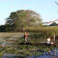 Läufer im Pantanal MS | Foto: Ivo Lima/ME