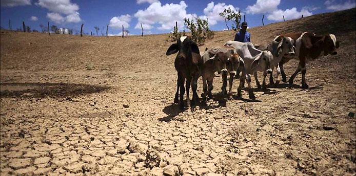 Dürre im Nordosten - Foto Handout Video