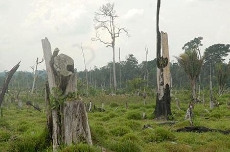Abholzung in Pará - Foto: Antonio-Cruz/AgenciaBrasil