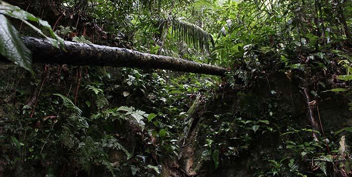 TM Brasilien EP05 - Amazonas 24 c TerraMater - Light&Shadow - Foto: Cristian Dimitrius