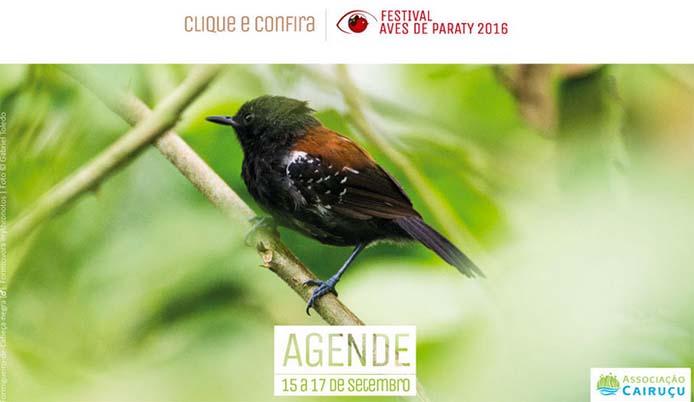 Festival Aves de Paraty 2016 - Grafik