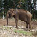 Erste Zufluchtsstätte Lateinamerikas für Elefanten in Brasilien eingerichtet