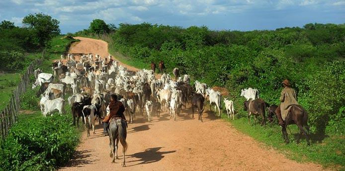 Foto: Fernando Frazão / Agencia Brasi