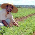 Kleinlandwirte sichern Ernährung Brasiliens