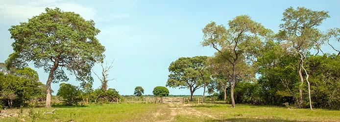 Oekosystem Serrado -Foto: sabiá brasiliano