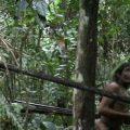 Immer mehr Holzfäller dringen in den Regenwald unkontaktierter Indigener ein