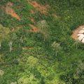 Neue Fotos von unkontaktiertem Amazonas-Volk, dem Auslöschung droht