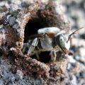 Brasilianer bangen um Bienen