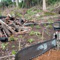 Amazonas-Regenwald verliert 6.624 Quadratkilometer in einem Jahr