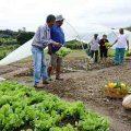 Landzensus: Brasilien befragt fünf Millionen Bauern