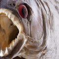 Piranha-Attacken an Flüssen Amazoniens