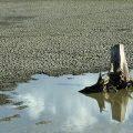 Brasiliens Dürren Thema beim Weltwasserforum