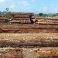 Manaus: Illegales Holz für europäischen Markt beschlagnahmt
