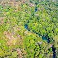 Im Pantanal wird unter Wasser gewandert