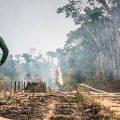 Agribusiness: Illegale Abholzer gehen straffrei aus