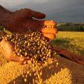 Politiker wollen Erleichterungen für Agro-Gifte