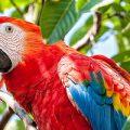 Brasilien weltweit Vize bei Vogelreichtum