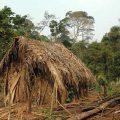 Letztes Stammesmitglied lebt seit 22 Jahren isoliert im Amazonas-Regenwald