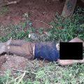 Indigener Umweltschützer ermordet: Holzmafia nimmt indigenes Volk ins Visier