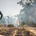 Angriff auf Umweltbehörde nach Einsatz gegen Holzmafia
