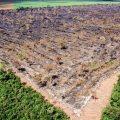 Politik heizt Kahlschläge an: 7.900 Quadratkilometer Amazonas-Regenwald vernichtet
