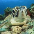 Brasilianische Forscherinnen lüften Geheimnisse der Meeresschildkröten