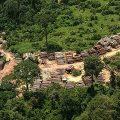 Internationales Manifest zur Regenwald-Rettung stößt auf Kritik