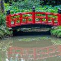 Botanischer Garten New York bietet Eintauchen in tropische Welt Burle Marxs