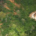 Tausende Goldgräber dringen in Yanomami-Gebiet ein