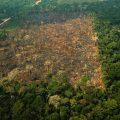 Amazonien: Ende der Brände nicht in Sicht