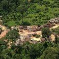Kriminelle Netzwerke und Milizen stecken hinter Rodungen und Gewalt im Amazonas-Regenwald