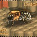 Brasilianer wollen mit Bienen ohne Stachel Caatinga schützen