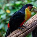 Parque das Aves - Foto: sabiá brasilinfo