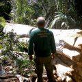 Human Rights Watch wirft Bolsonaro-Regierung vor, Gesetzlosigkeit in Amazonien zu schüren