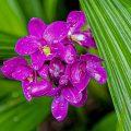 Forscher entdecken jährlich 250 neue Pflanzenarten in Brasiliens Schutzgebieten