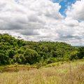 Bauer pflanzt 20.000 Bäume und produziert Wasser