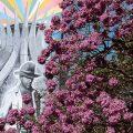 Lilafarbene Blüten erfreuen Brasilianer zum Winteranfang