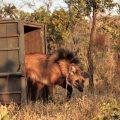 Zoo Brasílias nimmt fünf Wolfswaisen auf