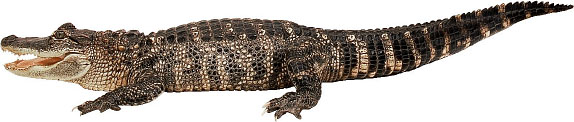 tierisches25