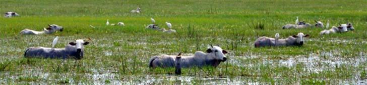regenzeit_pantanal