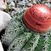DSC_2738 - cactus