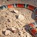 False Coral Snake - Erythrolamprus aesculapii