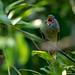 Schreeuwende vogel