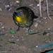DSCN6412-CostaRica170122-1019.jpg