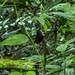 DSCN3798-CostaRica170121-128.jpg