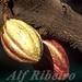 Alf 0036 - 0455