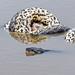 Pantanal_4103
